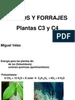 6.Plantas C3 Y C4