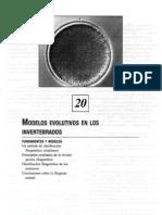 20 Modelos Evolutivos de Los In Vertebra Dos