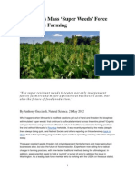 Monsanto Super Weeds Force Return to Traditional Farming 21may12