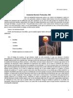 Clase 10 TC Anatomia Normal,Protocolos de SNC
