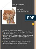 Anatomi Kepala Dan Leher