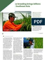 Rice breeding brings billions to Southeast Asia