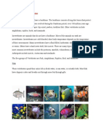 Science-Vertebrates and Invertebrates
