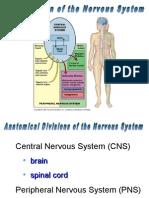 013 Nervous System