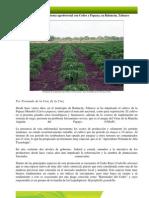 Evaluacion de Un Sistema Agroforestal