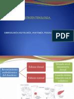 Embriologia de Pancreas