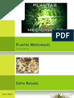 Plantas Compatible]