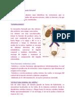 Practica No12 Aparato Urinario.