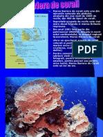 Marea Bariera de Corali - Boer Cristina