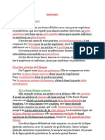 anatomie-l-os-iliaque-pdf
