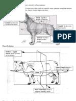 resumen osteología bovina