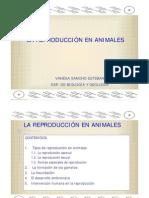 reproduccion de animales