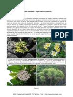 Eduart Zimer - Plante Suculente - Partea 1-a (2011)