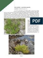 Eduart Zimer - Plante Suculente - Partea a 2-a (2011)