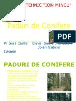 PADURI DE CONIFERE