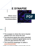 02THE SYNAPSEPC