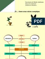 Ecologia Ecosistema Maduro y Comunidad Climax
