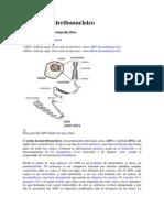 Ácido desoxirribonucleico