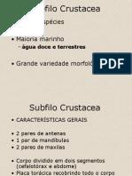 05. Subfilo Crustacea