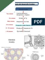 Fisiología del tiroides 2009