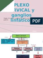 plexo cervical  y ganglios linfáticos1
