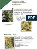Descriptifs variétés weed