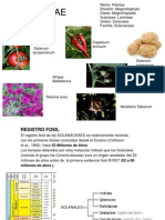 Expo Solanaceae