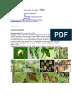 Bolile Prunului in Imagini- Combtere