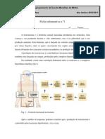 Ficha informativa n.º 1