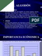 algodon PRESENTACION