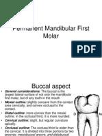 5.Permanent Mandibular First Molar