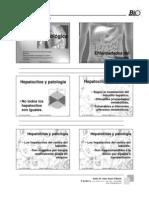 Higado Graso Chile . PDF