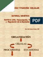 Material Genetico