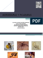 Mordeduras+y+Picaduras+Exposicion