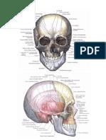 anatomie omului