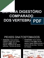 c48b336b43b1 Sistema Digestório Comparado