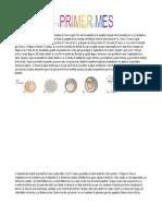 Desarrollo_Embrionario_biologia_03-06