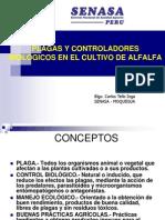PLAGAS Y SUS CONTROLADORES BIOLÓGICOS EN EL CULTIVO