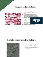 Histology Epithelium