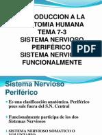 7-3-SISTEMA NERVIOSO PERIFERICO
