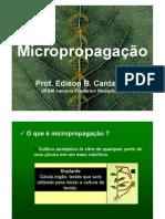 13a aula - Micropropagacao