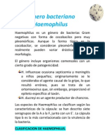 Genero bacteriano Haemophilus