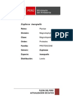 Division Magnolioplyta Clase Magnoliopsida O Proteales
