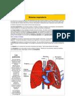 Sistema respiratorio11