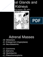 Adrenals and Kidneys