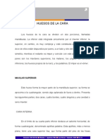 HUESOS_DE_LA_CARA