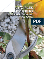 Principles of Pruning