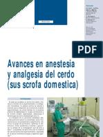 anestesia-cerdo