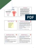 anatomia utero (1)