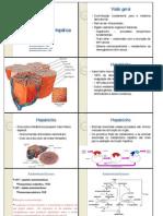 função hepatica